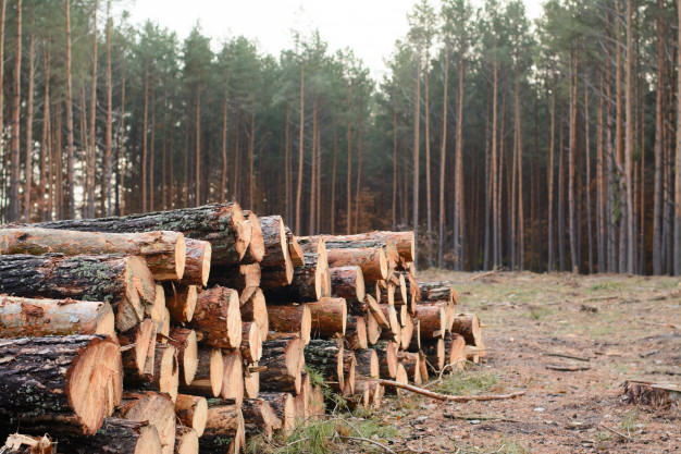 woodpile-freshly-harvested-pine-logs-lays-near-pine-forest_123211-1007